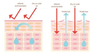 healthy-skin-barrier-e1538673524788-25